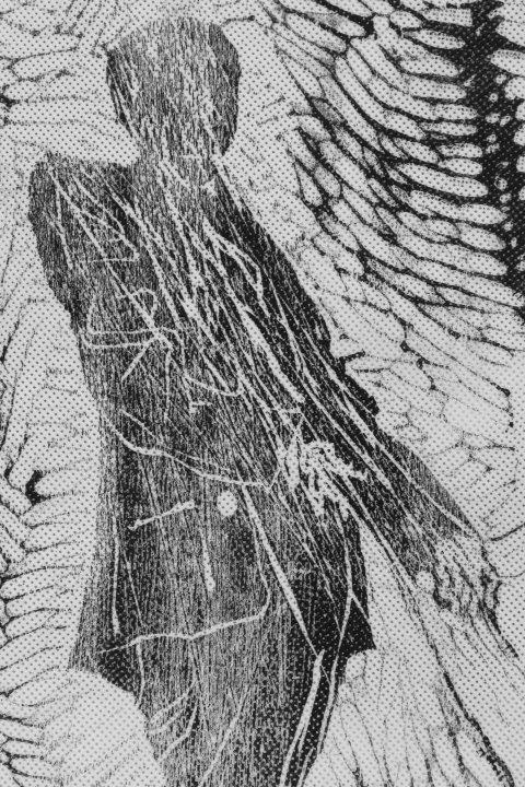 drzeworyty na www 017